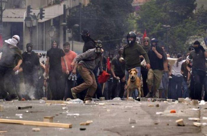 Psy z ulicznych protestów 1