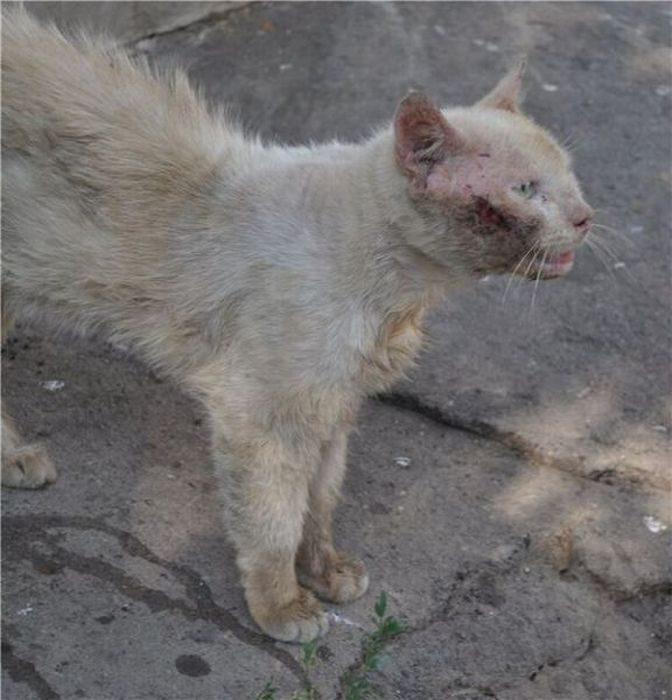 Koty, które dostały szansę na drugie życie 5