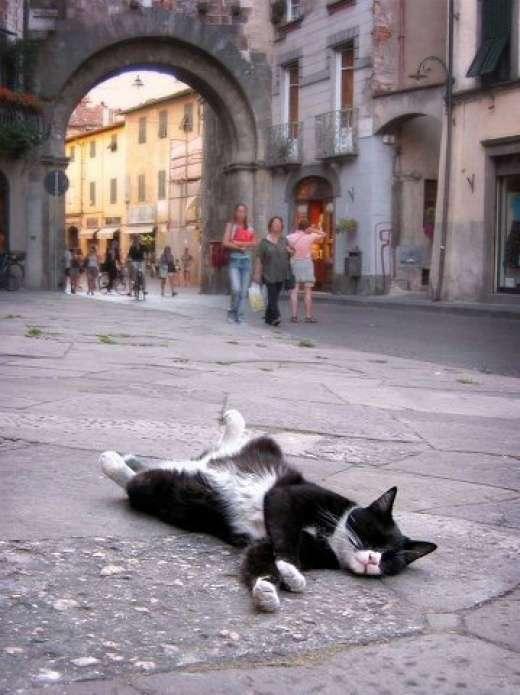 Rozpuszczone, leniwe koty 17