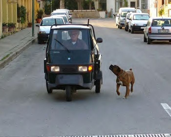Zwierzęta kontra samochody 11