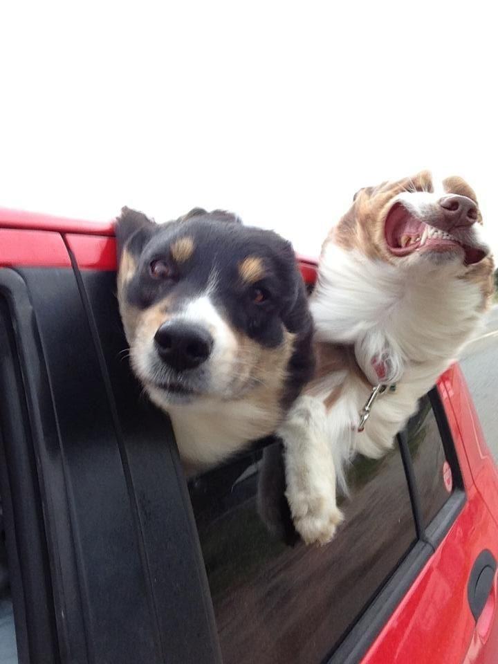 Zabawne zwierzaki #157 1