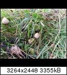 Bild: http://abload.de/thumb/20131101_123939cvudp.jpg