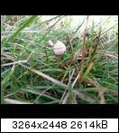Bild: http://abload.de/thumb/20131101_124124t8u1s.jpg