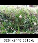 Bild: http://abload.de/thumb/20131101_132556l0uj2.jpg