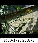 [Bild: cocktailfrucht46suz.jpg]