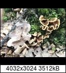 [Bild: fc32f15d-e3f6-42c2-asyk2n.jpeg]