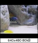 http://abload.de/thumb/img_0783vyfls.jpg