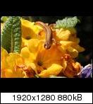 http://abload.de/thumb/img_11056kc6h.jpg