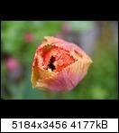 http://abload.de/thumb/img_1117trca9.jpg