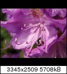 p51600269ir4l.jpg