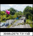 p5160085qkrpc.jpg