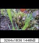 Bild: http://abload.de/thumb/s2s7ogg.jpg