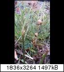 Bild: http://abload.de/thumb/s5v3rok.jpg