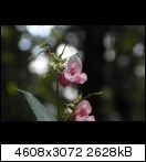sam_007555eyb.jpg