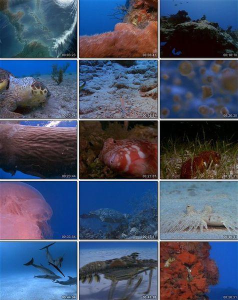 National Geographic: Karayip Denizinin Mucevherleri Ekran Görüntüsü 1