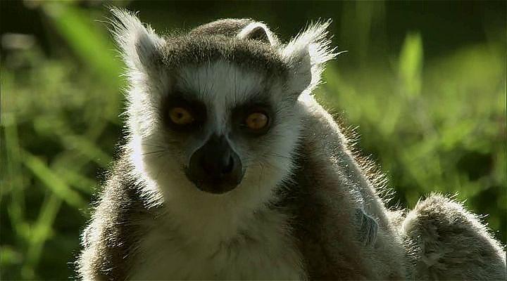 BBC Madagascar: Kayıp Dünyalar Ekran Görüntüsü 1