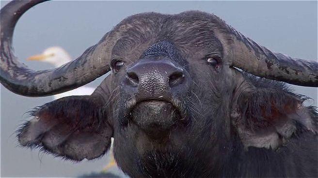 Afrika Kedileri Ekran Görüntüsü 2