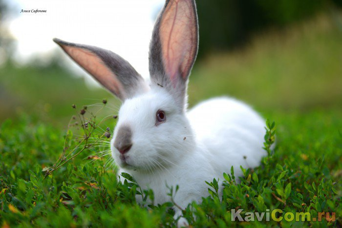 Пасхальный кролик и пасхальные яйца — это символы изобилия.