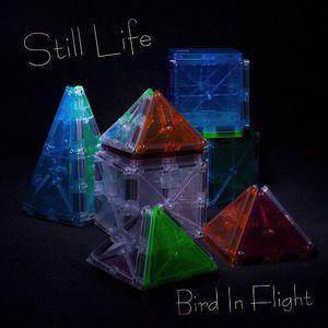 Bird In Flight - Still Life (2017)
