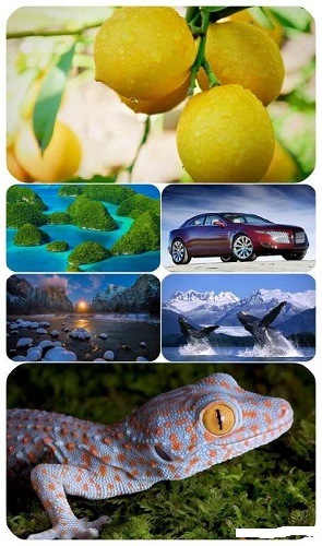 download Beautiful Mixed Wallpapers Pack 623