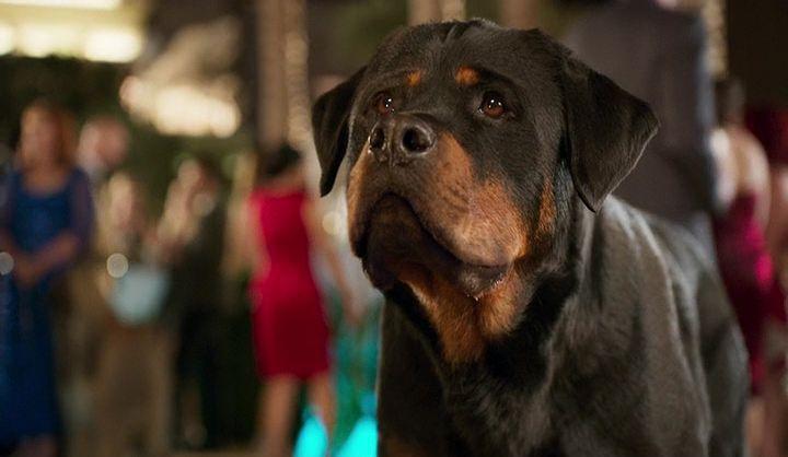 Show Dogs Ekran Görüntüsü 2