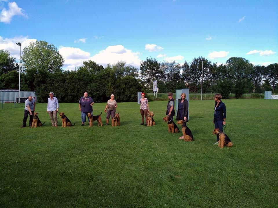 Airedale Terrier Klub