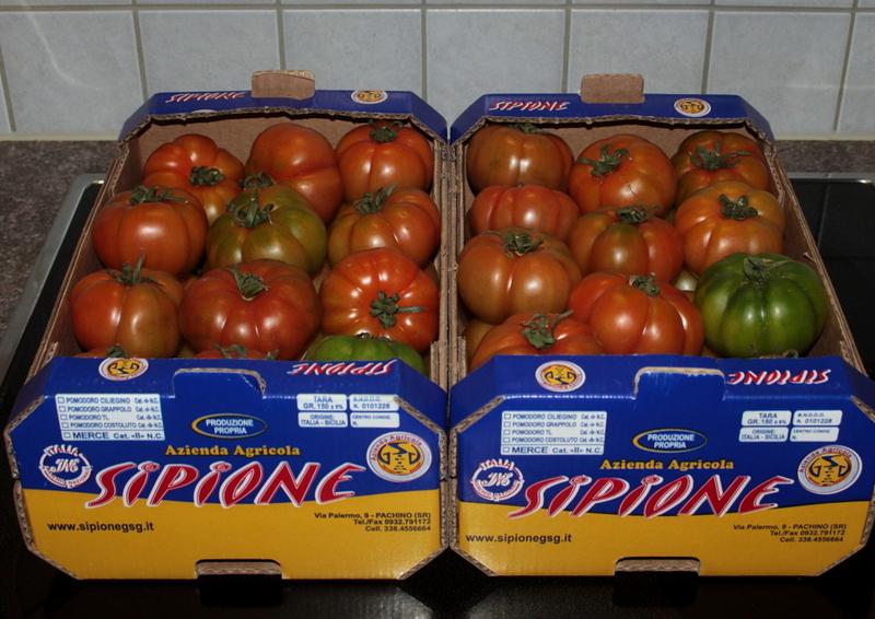 Tomaten Forum