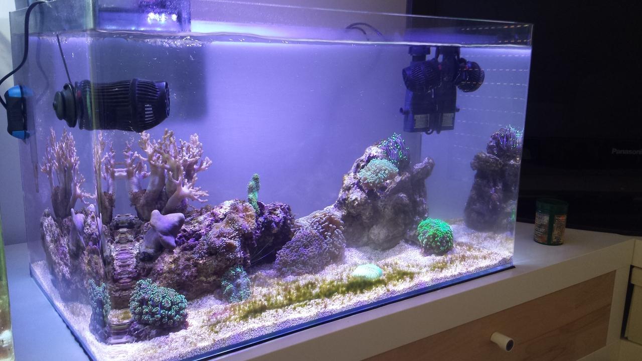 ich bin infiziert meerwasserinfiziert unter 100 liter dein meerwasser forum f r nanoriffe. Black Bedroom Furniture Sets. Home Design Ideas