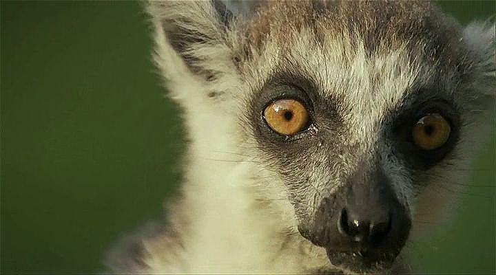 BBC Madagascar: Sıcağın ve Tozun Torakları Ekran Görüntüsü 1