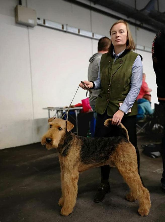 Airedale Terrier Zucht Wien