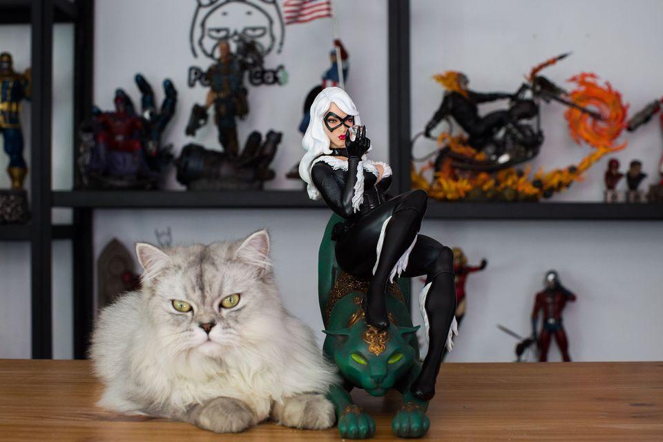 Premium Collectibles : Black Cat - Page 2 25488119_187632094601dosge