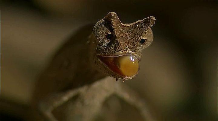 BBC Madagascar: Kayıp Dünyalar Ekran Görüntüsü 2