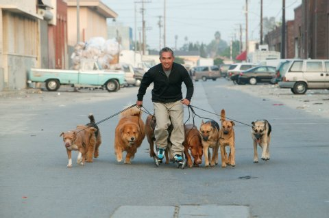 strafe wildernder hund