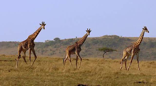 BBC Africa 6.Bölüm The Future Ekran Görüntüsü 2