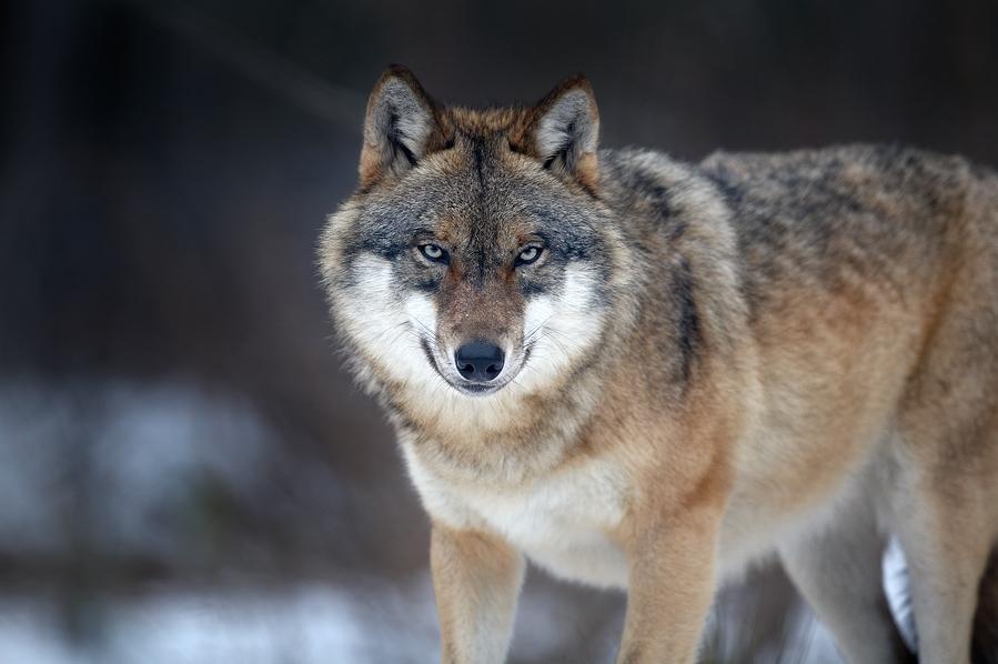 Les loups de Shkuro - Page 2 32_7b7jk8