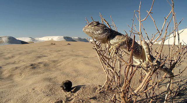 BBC Africa 5.Bölüm Sahara Ekran Görüntüsü 1