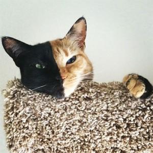 Yüzününün İki Yanı Ve Gözleri Birbirinden Tamamen farklı Kedi