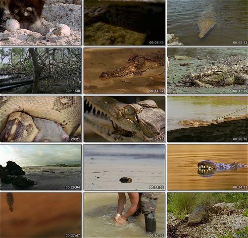 Kosta Rica'nın Katil Timsahları Ekran Görüntüsü 1