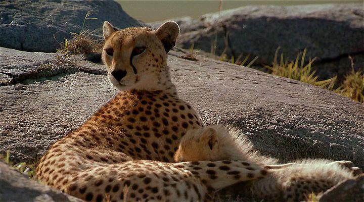 Africa: The Serengeti Ekran Görüntüsü 2