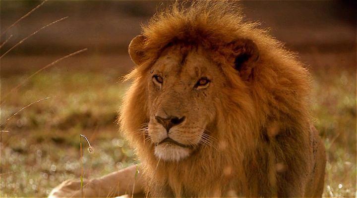 Africa: The Serengeti Ekran Görüntüsü 1