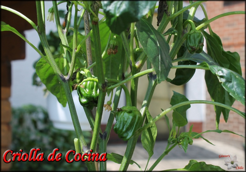 [Bild: 6_criolladecocina78sfm.jpg]