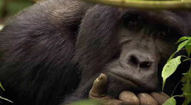 BBC Africa 2.Bölüm Savannah Ekran Görüntüsü 2