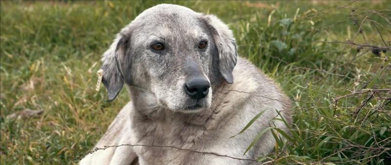 Köpek Filmi Ekran Görüntüsü 1