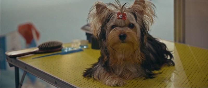 Köpek Filmi Ekran Görüntüsü 2