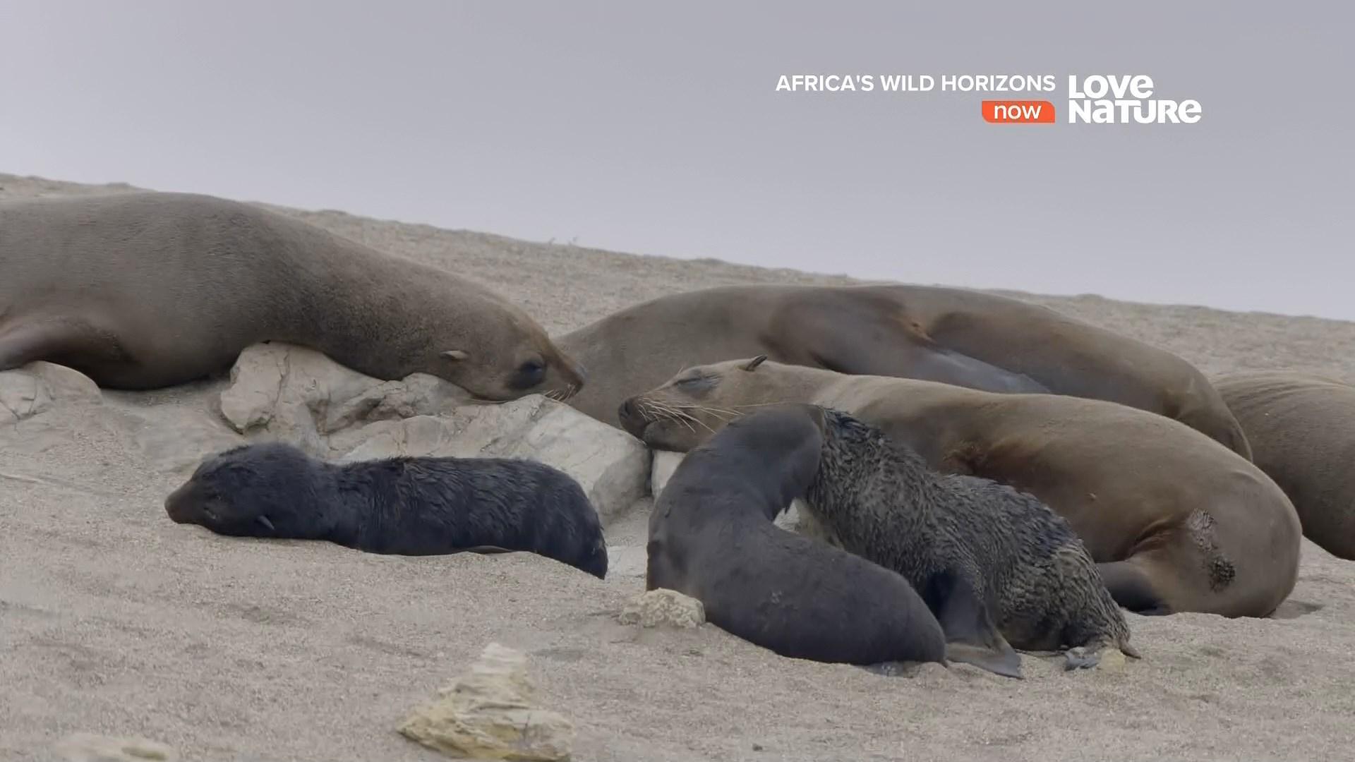 [Resim: afrika.vahsi.ufuklari51j1g.jpg]