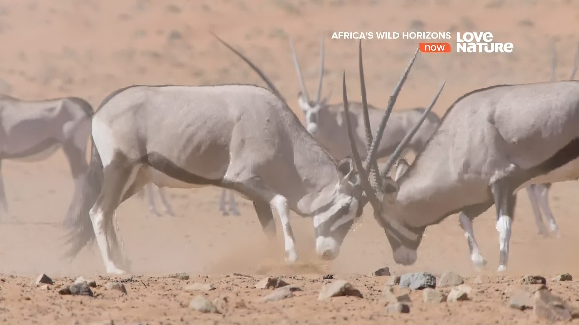 [Resim: afrika.vahsi.ufuklariudka0.jpg]
