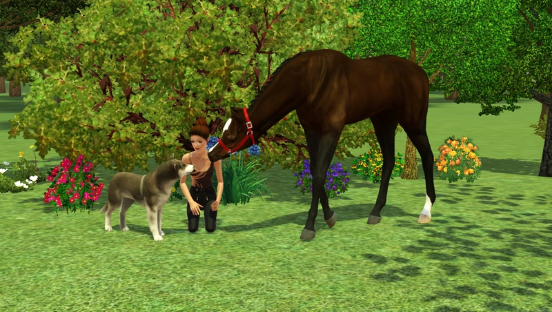 Bild ah_horse_and_dog7ad_hsii3a.jpg auf abload.de