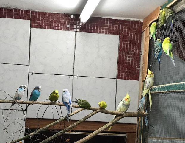 Wellensittich Klettergerüst : Frisch gefliestes vogelzimmer vwfd wellensittich forum
