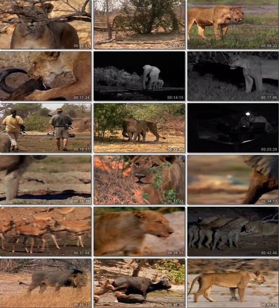 En Vahşi Avcılar: Aslanlarla Yürüyüş Ekran Görüntüsü 1