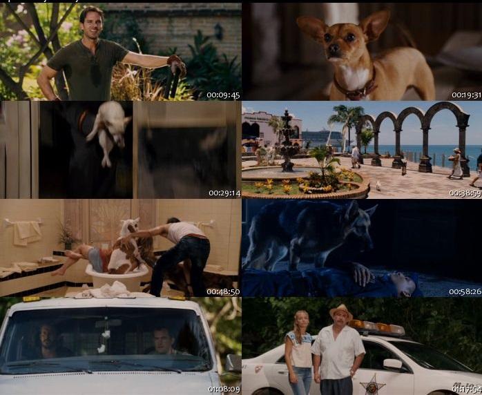 Beverly Hills Chihuahua - 2008 Türkçe Dublaj BRRip indir